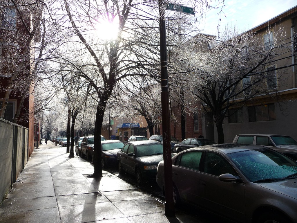 icy street and trees